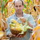 Middle aged caucasian farm worker holds corn cobs in wicker basket - PhotoDune Item for Sale