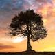 Silhouette of tourist under majestic tree - PhotoDune Item for Sale
