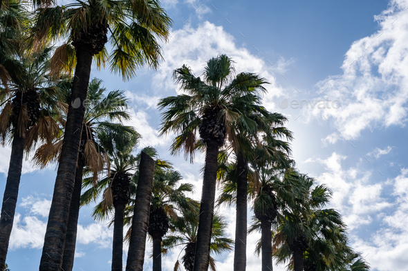 Palm trees against blue sky background. Sunny day - Stock Photo - Images