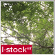 Trees Pack 3 (3-Pack) - VideoHive Item for Sale
