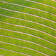 Background of mowed dry hay on green meadow from directly above - PhotoDune Item for Sale