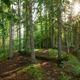 Path through summer forest in Muranska Planina national park, Slovakia, Europe - PhotoDune Item for Sale
