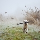 Dog running against autumn landscape in fog - PhotoDune Item for Sale