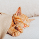 Cute ginger kitten sleeps - PhotoDune Item for Sale