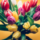 Colorful Classic Tulips - PhotoDune Item for Sale