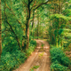 Fairy Forest Lane Road Way Path Through Summer Green Deciduous Forest. European Nature - PhotoDune Item for Sale
