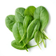 fresh green spinach leaves - PhotoDune Item for Sale