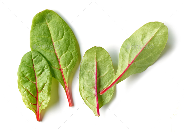 fresh green beet root leaves - Stock Photo - Images