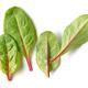 fresh green beet root leaves - PhotoDune Item for Sale