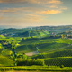 Langhe vineyards landscape, Barbaresco. Piedmont, Italy Europe. - PhotoDune Item for Sale