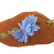 Blue chicory flower and powder of instant chicory - PhotoDune Item for Sale