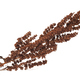 Dry Rumex confertus plant - PhotoDune Item for Sale