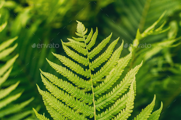 Natural green fern background. Summer season - Stock Photo - Images