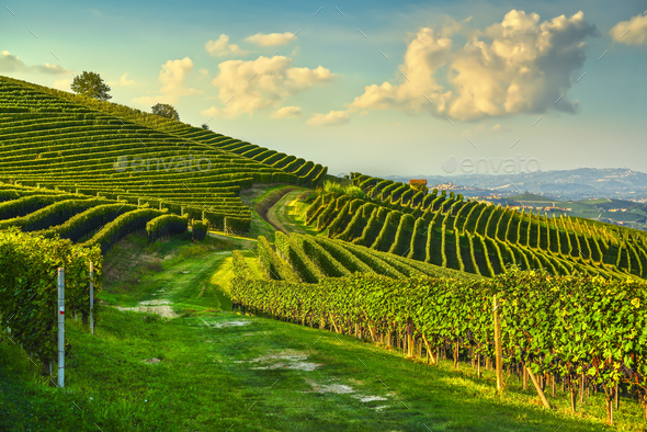 Langhe nebbiolo vineyards and a path, Barolo, Piedmont, Italy. - Stock Photo - Images