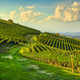 Langhe nebbiolo vineyards and a path, Barolo, Piedmont, Italy. - PhotoDune Item for Sale