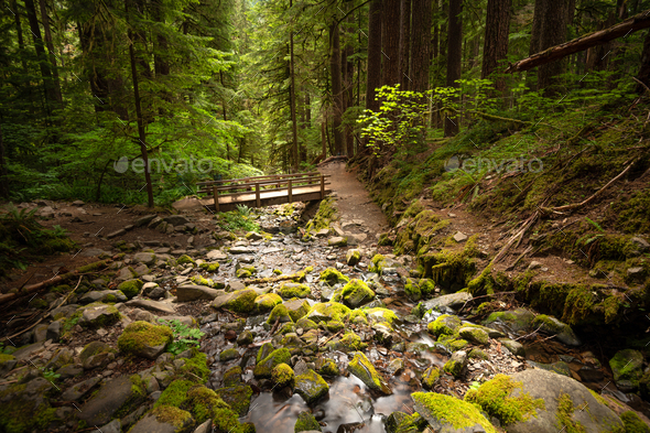 Olympic National Park, Washington, USA - Stock Photo - Images