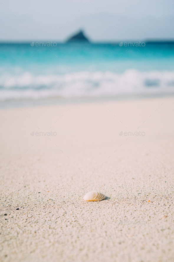 Seashell on sandy beach with defokused white foam of rolling ocean waves in background. Tropical - Stock Photo - Images
