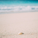 Seashell on sandy beach with defokused white foam of rolling ocean waves in background. Tropical - PhotoDune Item for Sale