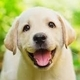 Happy Puppy Whistling Funny Background