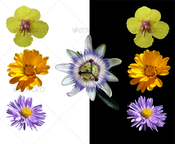 Four Isolated Wild Flowers - Nature & Animals Isolated Objects