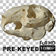 Rabbit Skull Spinning Prekeyed - VideoHive Item for Sale