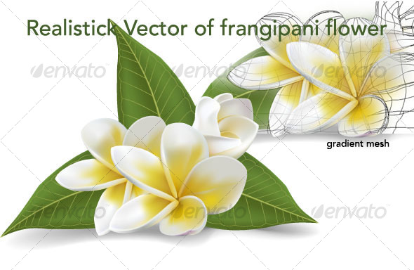 frangipani vector flowers - Flourishes / Swirls Decorative
