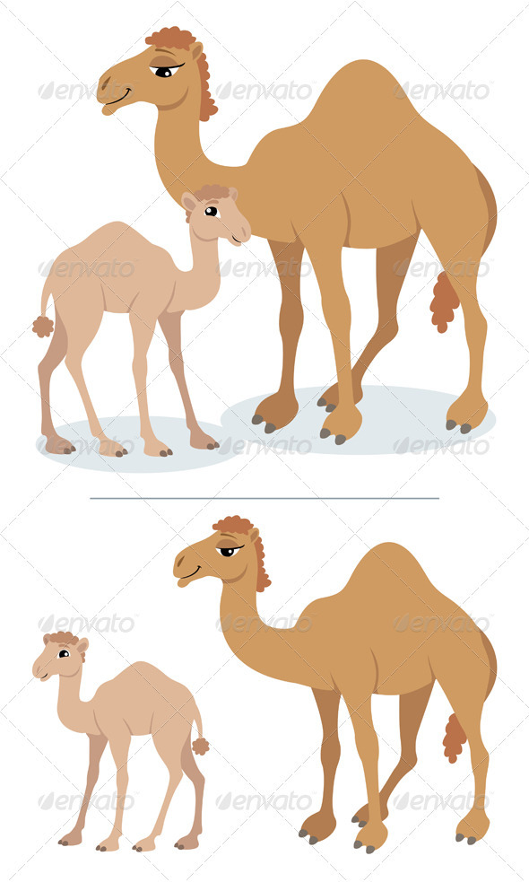 Camels - Animals Characters