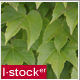 Green Leaf Pack 1 - VideoHive Item for Sale