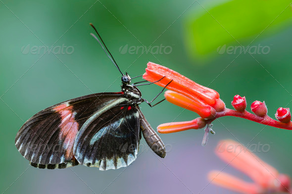 Tropical butterfly - Stock Photo - Images