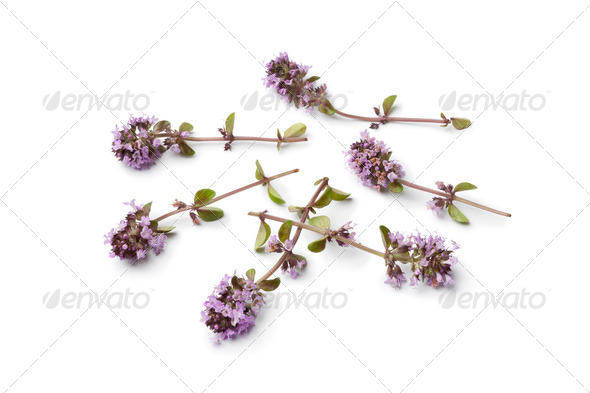Fresh oregano thyme flowers - Stock Photo - Images