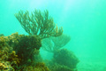 Close up of big green coral under water - PhotoDune Item for Sale