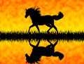 Horse - PhotoDune Item for Sale