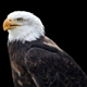 Eagle #3 - GraphicRiver Item for Sale