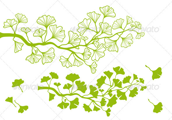 Ginkgo Branch With Leaves, Vector - Flowers & Plants Nature