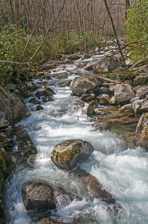 Spring Sun on a Mountain Stream - Stock Photo - Images