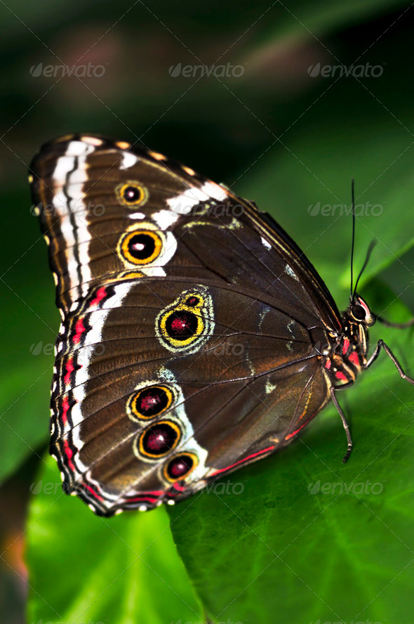 Butterfly On A Plant - Stock Photo - Images