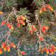 Flower Bokeh Background - PhotoDune Item for Sale