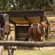 Old Wild West Horse Carriage and a Beautiful Pony in a Farm - PhotoDune Item for Sale