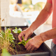 Close Up Of Senior Man Planting Plants Into Wooden Garden Planter At Home - PhotoDune Item for Sale