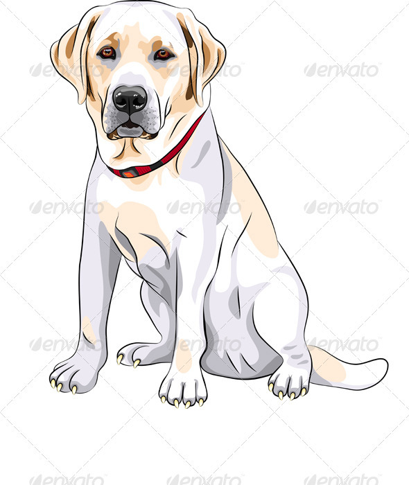 Vector Yellow Dog Breed Labrador Retriever  - Animals Characters