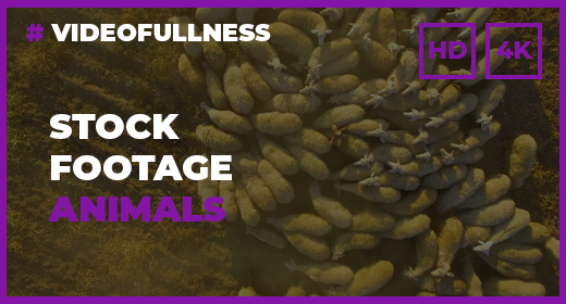 Animals Stock Footage