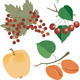 Juicy Berries and Fruits Gifts of Nature - GraphicRiver Item for Sale
