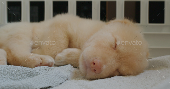 Little puppy sleep on towel - Stock Photo - Images