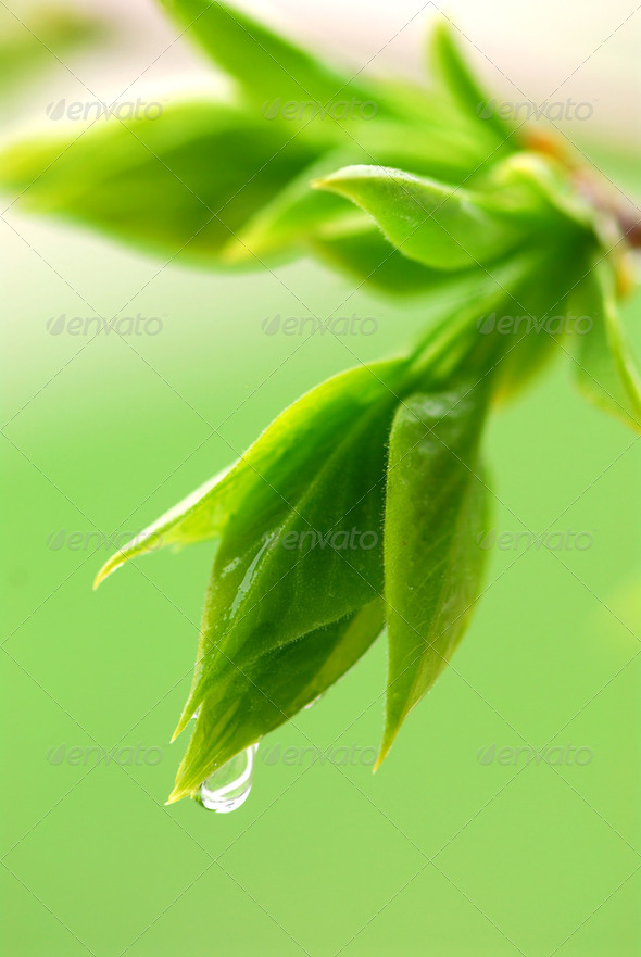 Spring Green Leaves - Stock Photo - Images