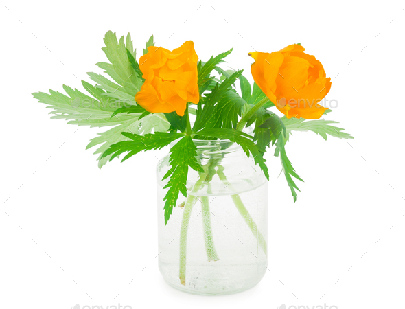 Globe-flowers in glass jar - Stock Photo - Images