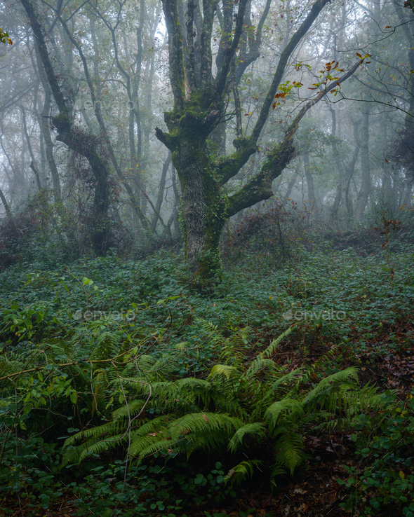 Moody atmosphere in an oak forest - Stock Photo - Images