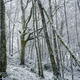 Winter atmosphere in a forest after a heavy snowfall - PhotoDune Item for Sale