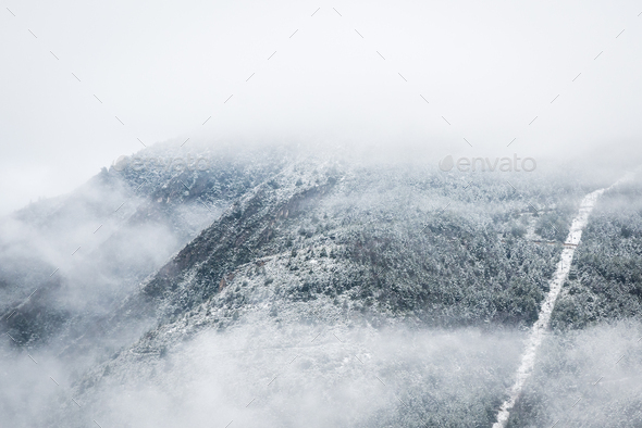 winter forest in snow and fog. - Stock Photo - Images