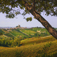 Langhe vineyards landscape and tree, Serralunga Alba, Piedmont, Italy Europe. - PhotoDune Item for Sale