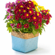 colorful chrysanthemum in flower basket - PhotoDune Item for Sale